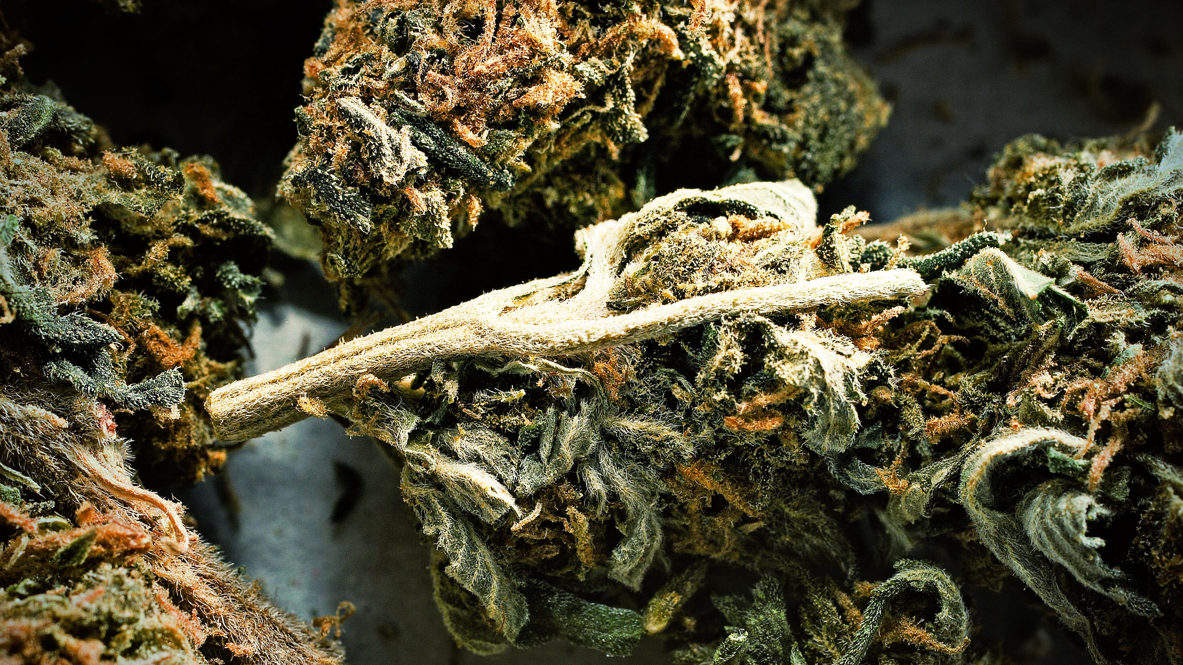 Marijuana Drug Free Va